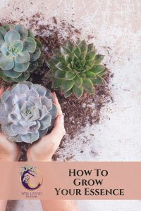 How_to_grow_your_essence
