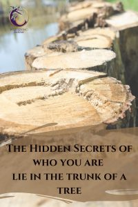 Lessons_From_A_Tree_The_Hidden_secrets_of_who_we_are