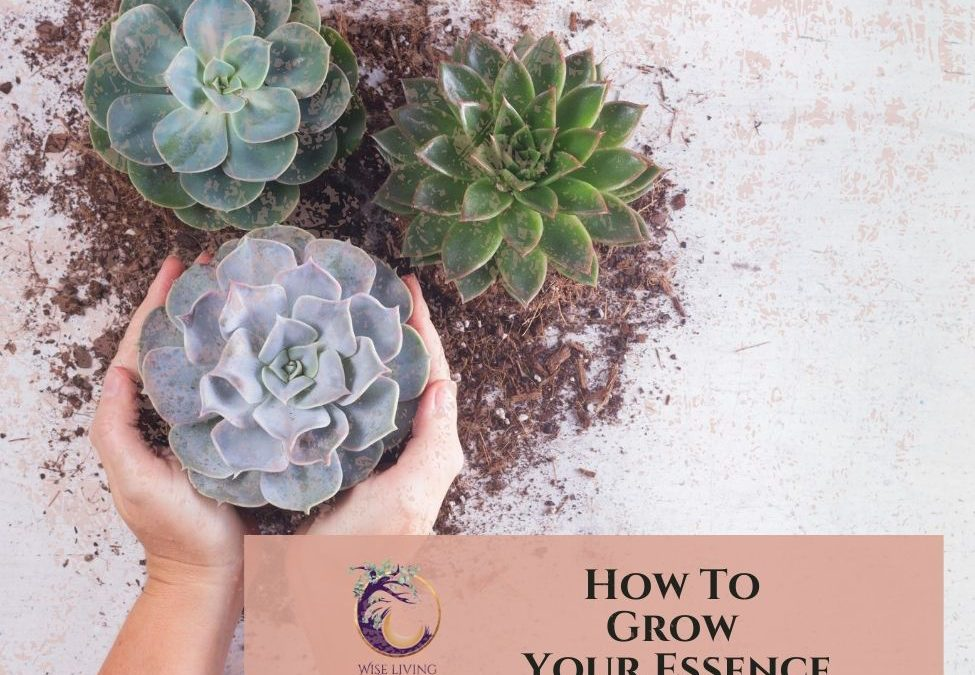 How To Grow Your Essence